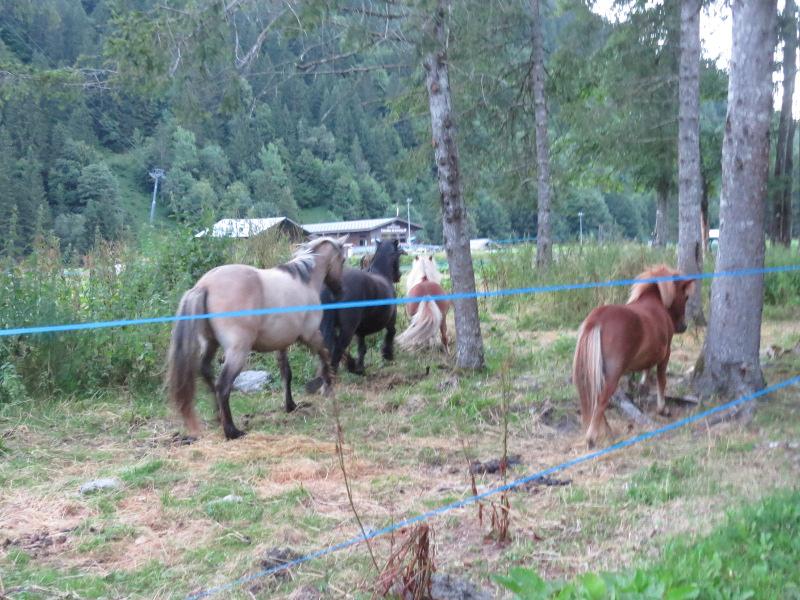 Yocco et Anook dans les Alpes 57_che10