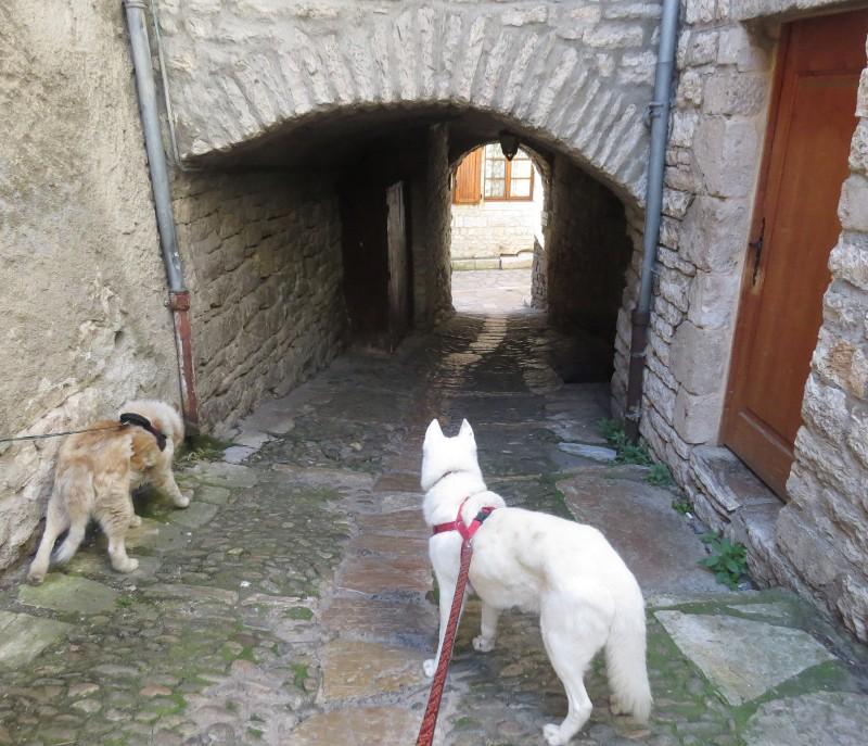Yocco et Anook en Ardèche et en Provence 61_ano10