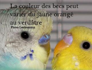 Le bec 2.0 Bec_or10