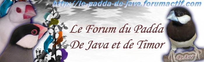 Le padda de Java et du Timor