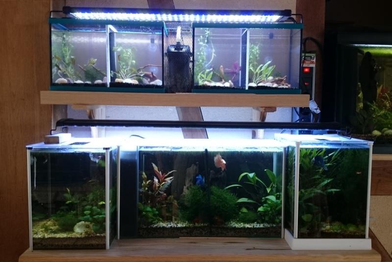 aquarium 10 litres quel filtre  Dsc_1210