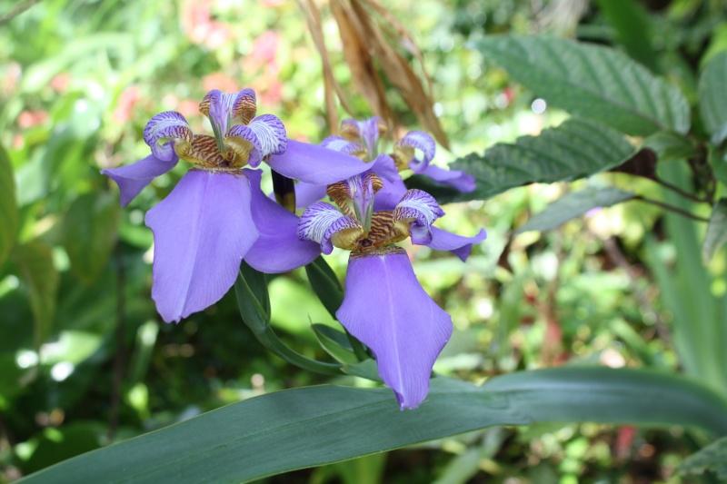 Quelques tropicales en fleurs, en ce moment Neomar10