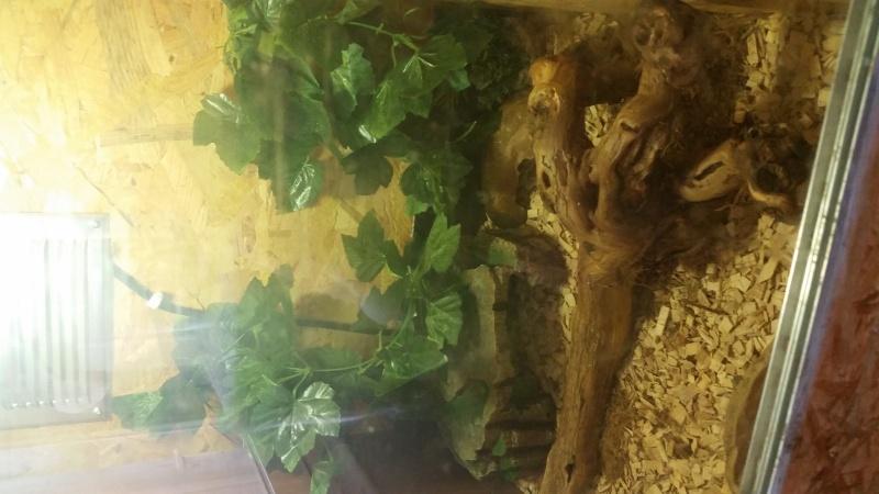 Inquiète pour mon petit Gecko 2016-010