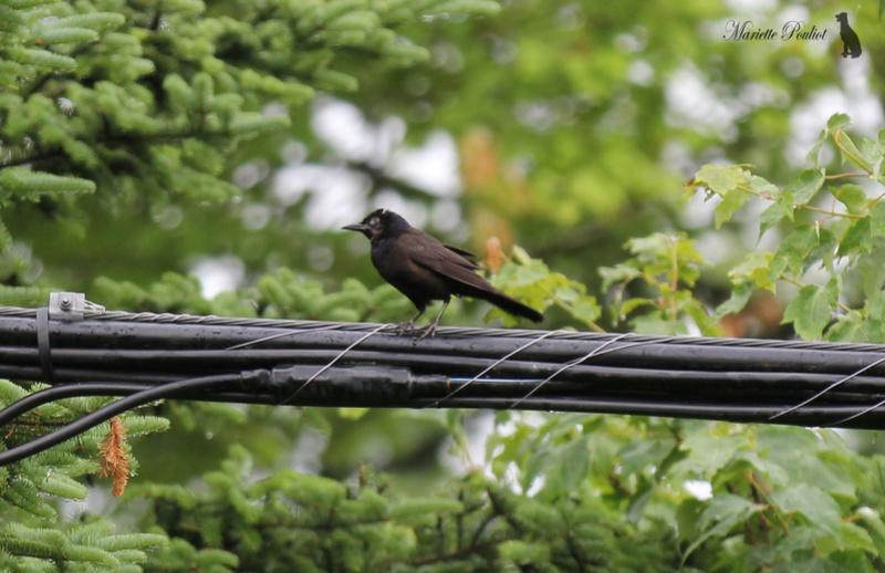 le mauvais temps a ramené les oiseaux  Img_2819