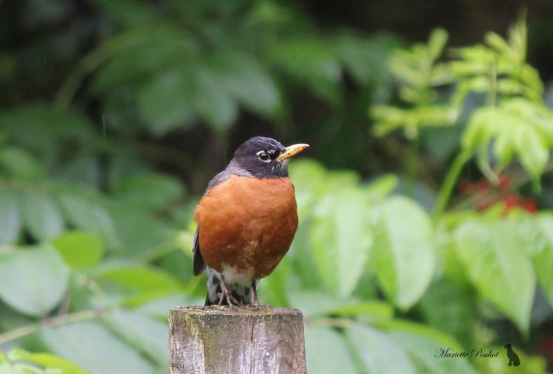 le mauvais temps a ramené les oiseaux  Img_2820