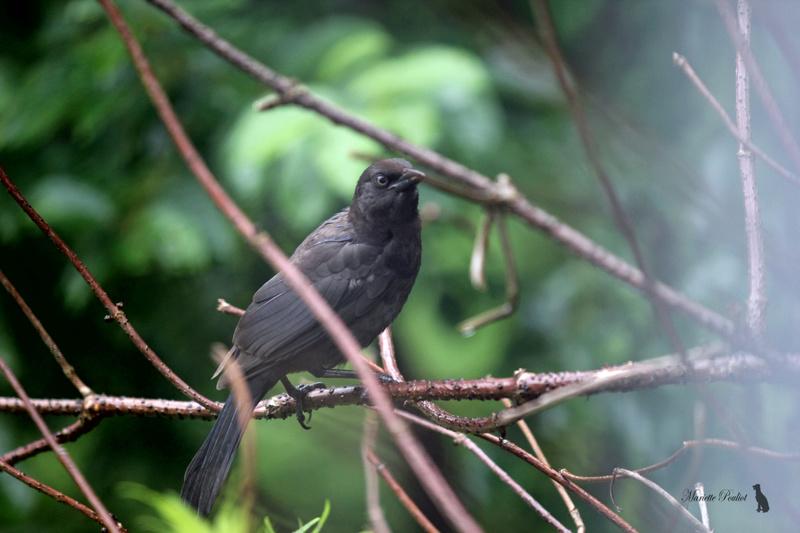 le mauvais temps a ramené les oiseaux  Img_2821