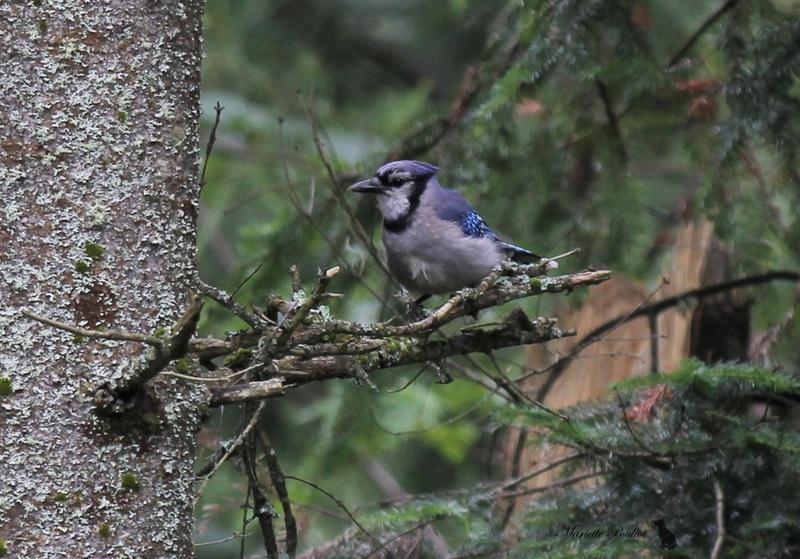 le mauvais temps a ramené les oiseaux  Img_2823
