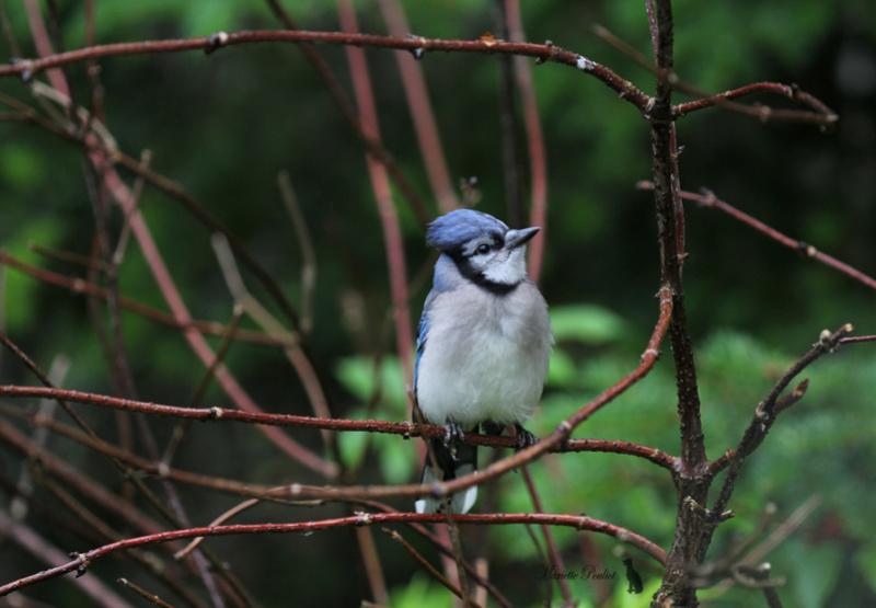 le mauvais temps a ramené les oiseaux  Img_2824