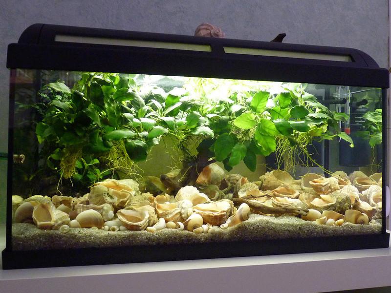 Petit bac 54L conchylicoles Aqua5410