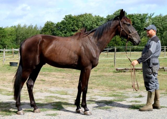 [PLACE NADEGE] GISMOND  Dormir au pied de son cheval ...... Gismon12