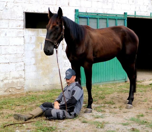 [PLACE NADEGE] GISMOND  Dormir au pied de son cheval ...... Gismon17