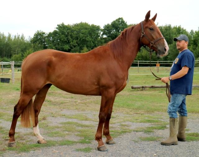 GOELAND Tf Pure race PP Il est très chouette ..... Goelan17