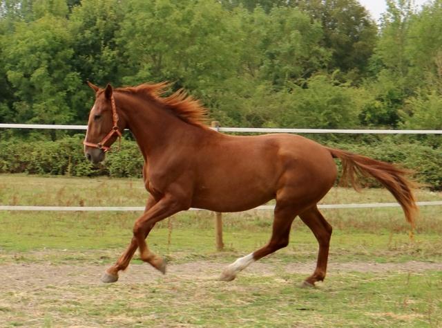 GOELAND Tf Pure race PP Il est très chouette ..... Goelan19