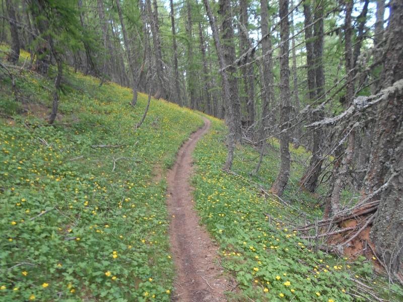Grand-Coyer moi aussi version Trail. Trail_22