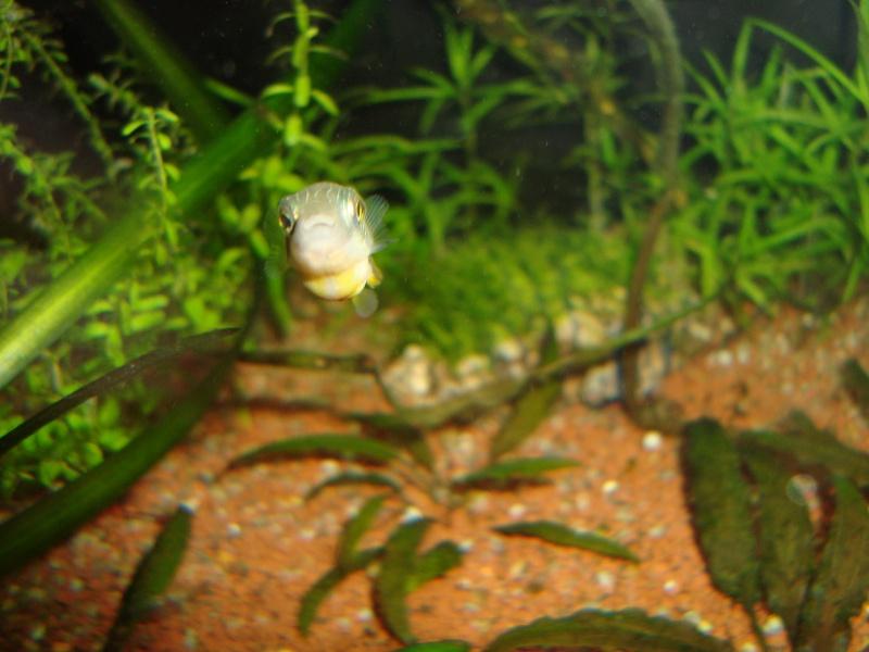 Ce post pour des photos marrantes de vos aquariums Dsc00911
