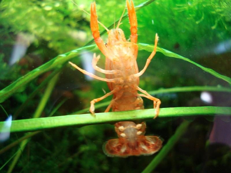 Ce post pour des photos marrantes de vos aquariums Dsc06010