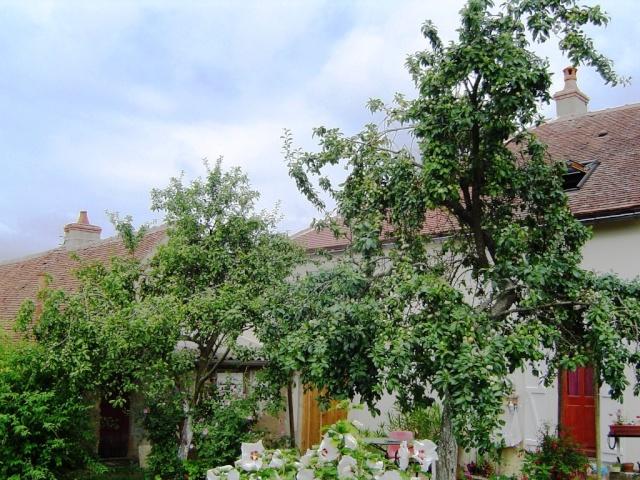Les pruniers de mon jardin Dsc09614