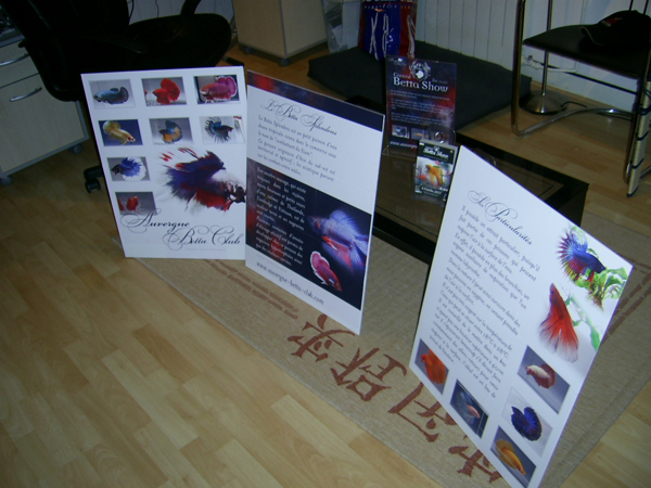 2nd Central Betta Show ! - Page 2 Pic_0810