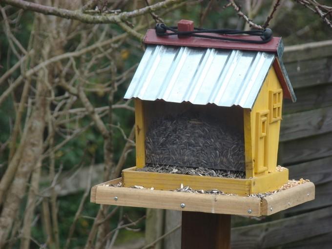 oiseaux de mon jardin 2011 Dsc05315