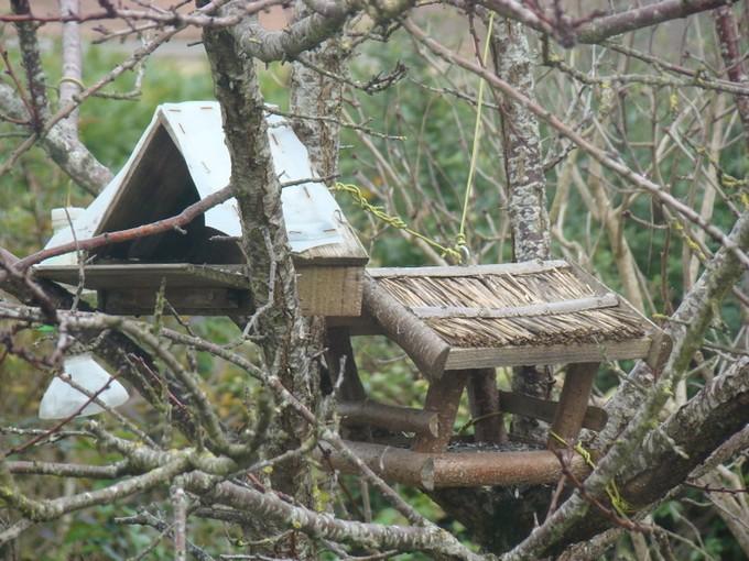 oiseaux de mon jardin 2011 Dsc05316