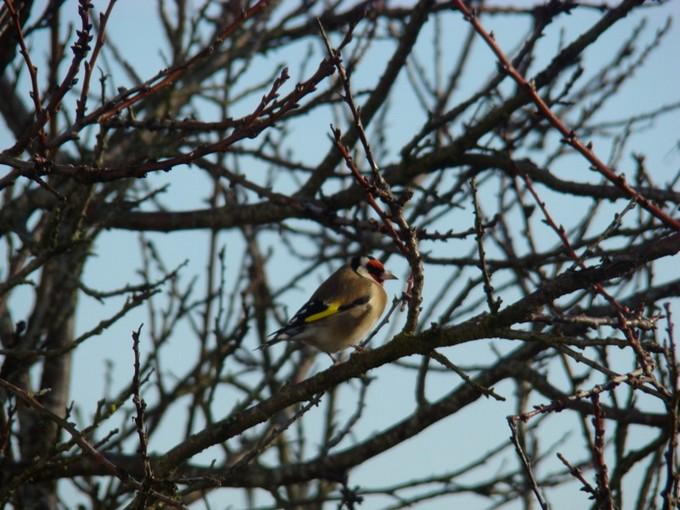 oiseaux de mon jardin 2011 Dsc05410