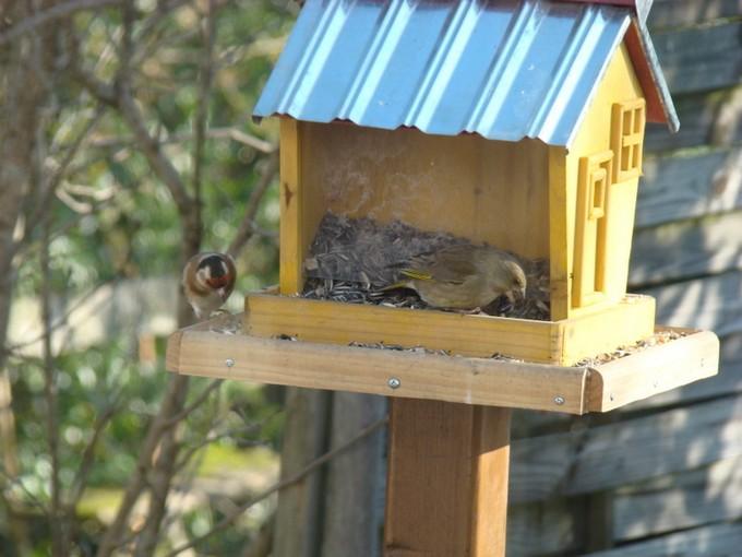 oiseaux de mon jardin 2011 Dsc05412