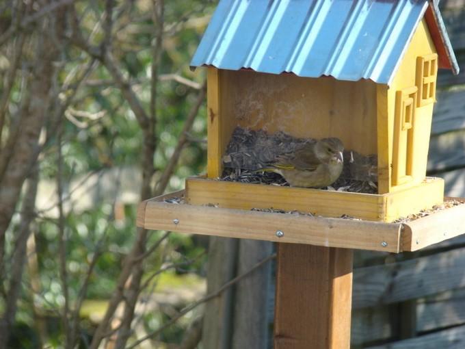 oiseaux de mon jardin 2011 Dsc05414