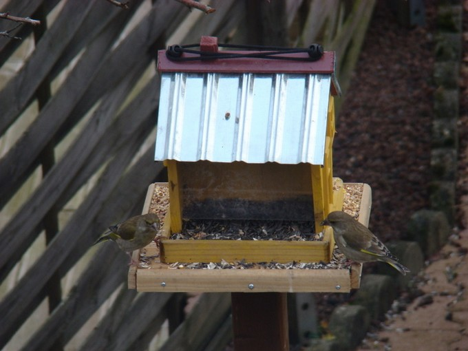oiseaux de mon jardin 2011 Dsc05415