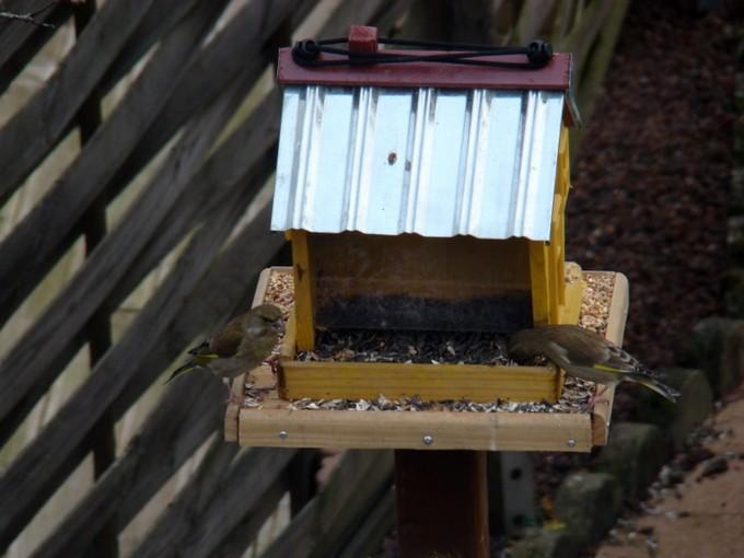 oiseaux de mon jardin 2011 Dsc05416