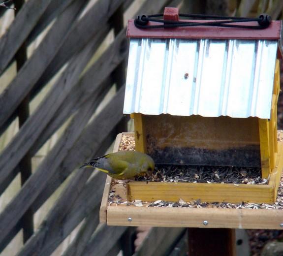oiseaux de mon jardin 2011 Dsc05417