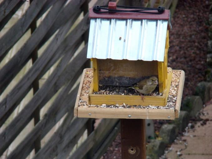oiseaux de mon jardin 2011 Dsc05419