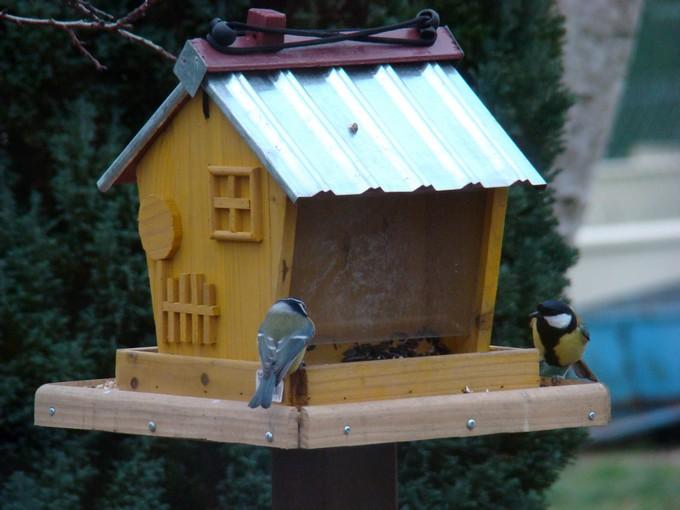 oiseaux de mon jardin 2011 Dsc05514