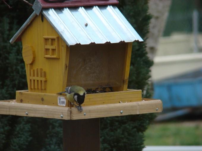 oiseaux de mon jardin 2011 Dsc05515
