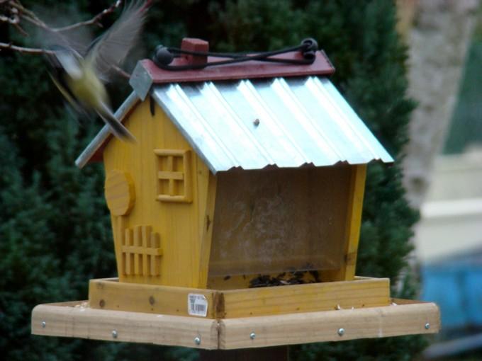oiseaux de mon jardin 2011 Dsc05516