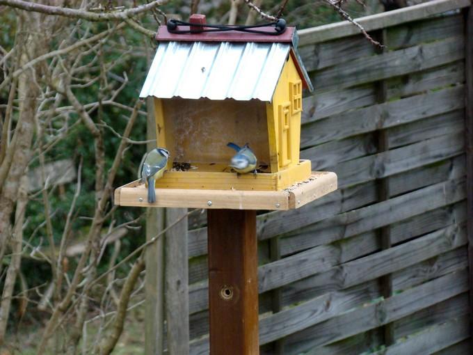 oiseaux de mon jardin 2011 Dsc05520