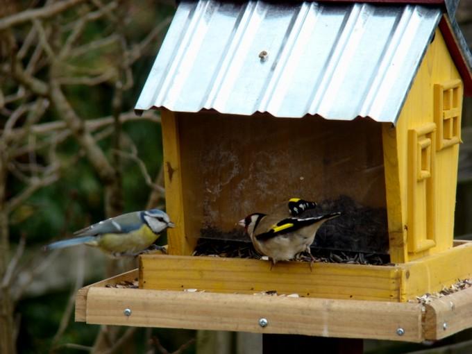 oiseaux de mon jardin 2011 Dsc05527