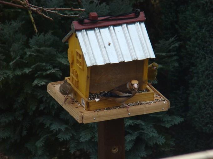 oiseaux de mon jardin 2011 Dsc05528