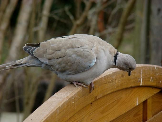 oiseaux de mon jardin 2011 Dsc05529