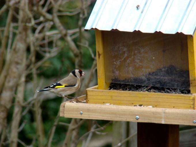 oiseaux de mon jardin 2011 Dsc05530