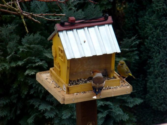 oiseaux de mon jardin 2011 Dsc05610