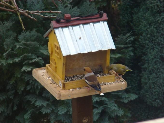 oiseaux de mon jardin 2011 Dsc05611