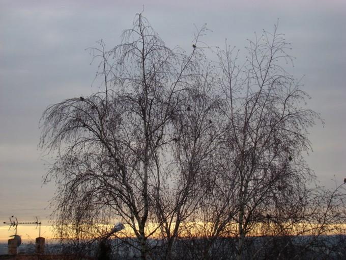 oiseaux de mon jardin 2011 Dsc05612