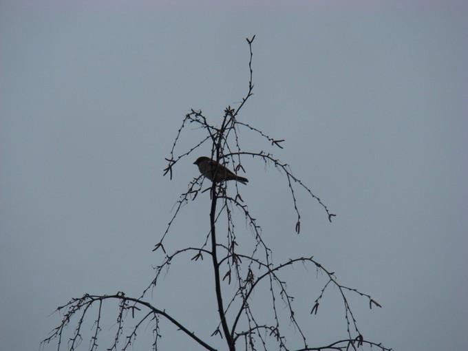 oiseaux de mon jardin 2011 Dsc05613