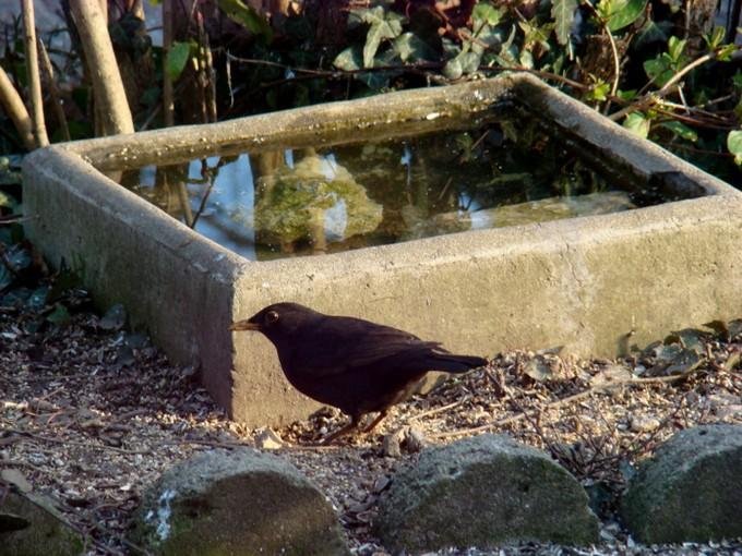 oiseaux de mon jardin 2011 Dsc05615
