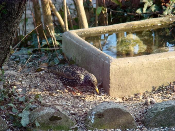 oiseaux de mon jardin 2011 Dsc05616