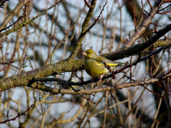oiseaux de mon jardin 2011 Dsc05618