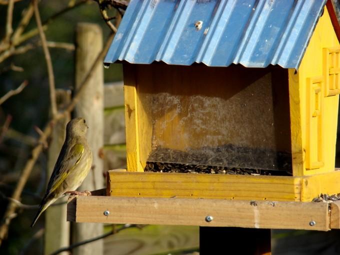oiseaux de mon jardin 2011 Dsc05619