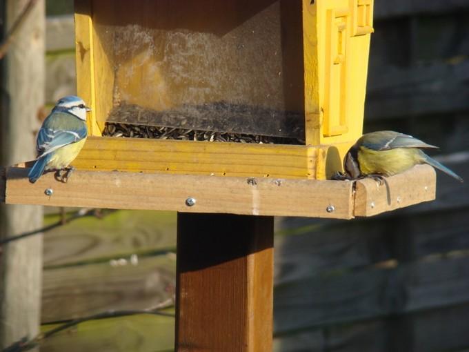 oiseaux de mon jardin 2011 Dsc05621