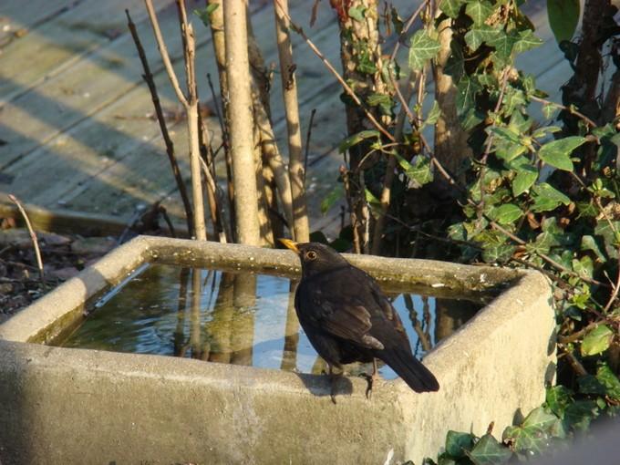 oiseaux de mon jardin 2011 Dsc05624