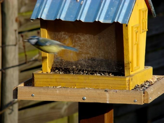 oiseaux de mon jardin 2011 Dsc05625